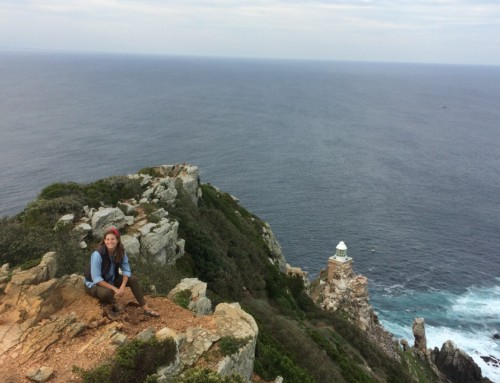 Cape Peninsula Tour: Best of the Cape