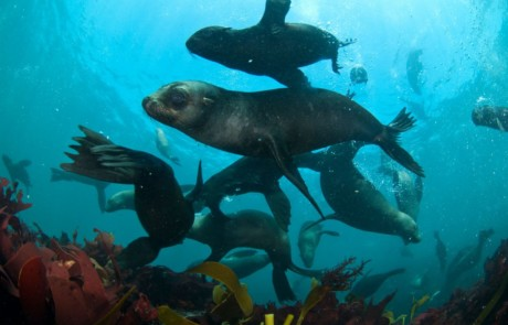 Cape Town Seal Snorkeling