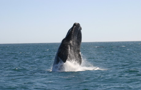 Wild Things Outdoor - Whale Watching